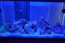 1st Ever 90g Mixed Reef Thumbnail