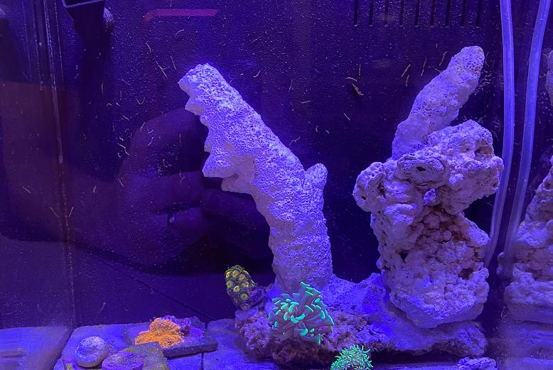 Pico tank/ clown baby on Mar 21, 2020