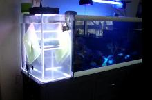 My Aquarium on March 31, 2020