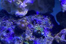 Mixed reef  Thumbnail