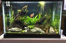 20 gallon high community Thumbnail