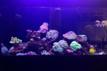 Chen's First Mixed Reef Thumbnail