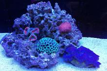 Ventino's reef on April 22, 2020