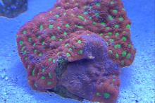 Red Sea Max C250 Thumbnail