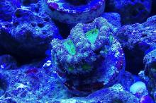 Ventino's reef on May 4, 2020