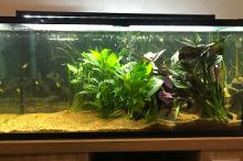 My Aquarium on May 9, 2020