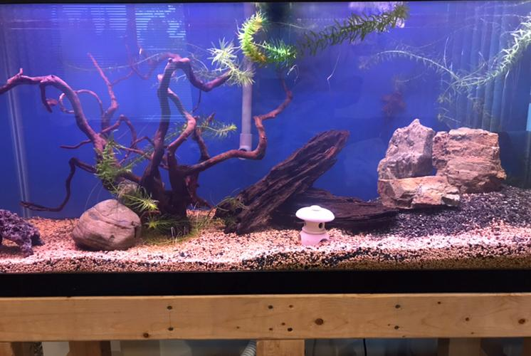 75 Gal Freshwater on May 16, 2020