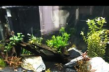 Fluval 200 on May 18, 2020