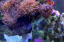190 Gallon Reef  Thumbnail