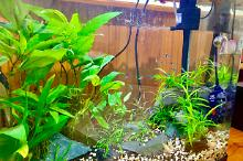 Planted Rock Aquarium Thumbnail