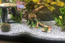 My Aquarium Fresh Thumbnail