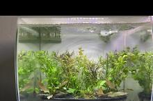 Black and white plant tank on Jul 4, 2020