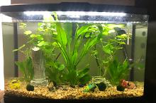 Betta Tank on Jul 25, 2020