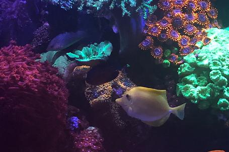 Saltwater Aquarium - Mixed Reef Tank on Jul 26, 2020