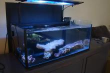 My Diy shallow tank on July 26, 2020
