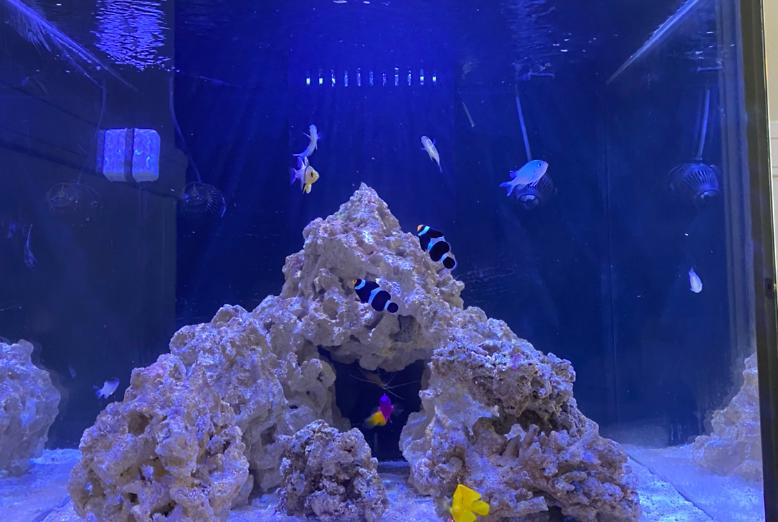 60g Cube reef on Aug 2, 2020