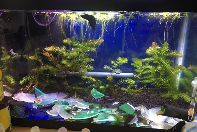 Freshwater planted tank on Aug 4, 2020