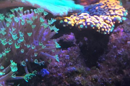 Saltwater Aquarium - Mixed Reef Tank on Aug 8, 2020