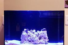 14 Gallons reef  on Aug 20, 2020