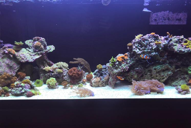 Mixed Reef on Aug 22, 2020