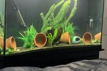 My Aquarium on Aug 23, 2020