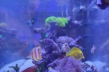 My Aquarium on August 27, 2020