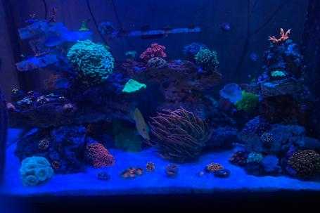 65 Gallon Marineland Thumbnail
