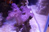 Thick Finger Leather Coral