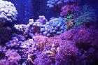 460l marine aquarium  on Oct 13, 2020