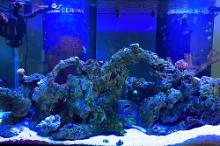 200gal reef on Oct 13, 2020