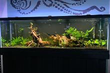 125 Gallon Planted Tank Thumbnail