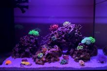 13.5 gallon reef  Thumbnail