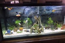 55 Gallon Community Tank Thumbnail
