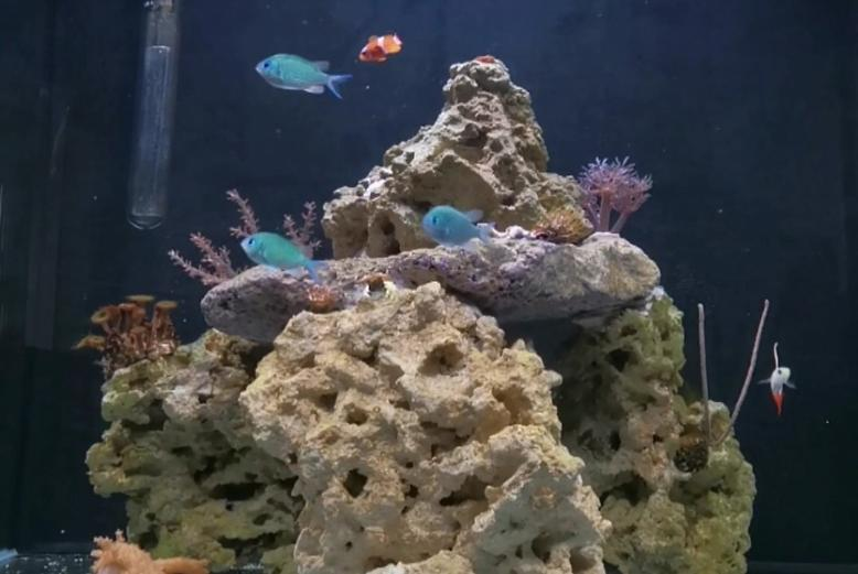 ChrisAquariums Reef on December 2, 2020