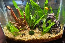 Bedroom Community Fish Tank Thumbnail