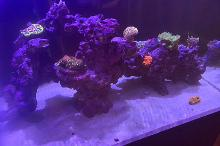 Shenoy_Reef_Mark_1 Thumbnail