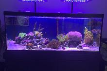 75gal Foyer Display Tank Thumbnail