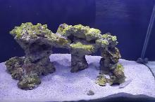 First Reef Thumbnail