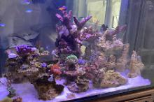 My Aquarium on Jan 12, 2021