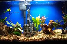 Planted Tank with Castle Thumbnail