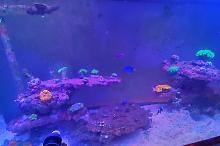 90 mixed reef Thumbnail