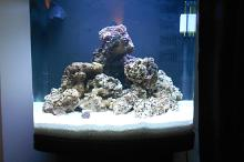 My Little Piece of Reef Thumbnail