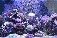 Craig's Mixed Reef Thumbnail