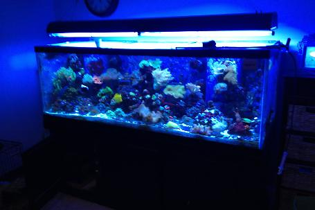Matt's 180g Mixed Reef Thumbnail