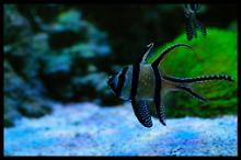 Aquarium de capitaine Thumbnail