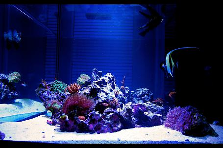 180 Gallon Reef Thumbnail