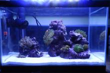 5.5 Gallon Nano Reef Thumbnail