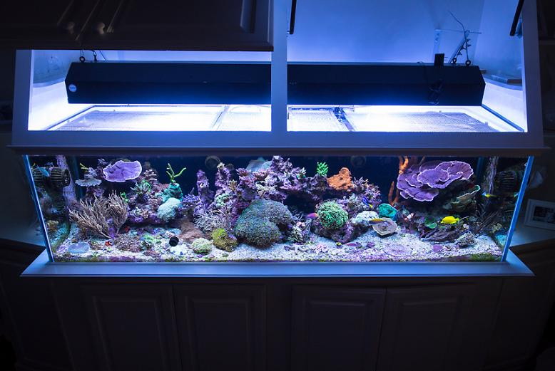 FTS February 27, 2014 - New MH/T5
