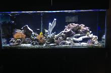 Jccj24's mixed reef Thumbnail