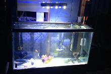 Mini Display ~ Fish Only Thumbnail